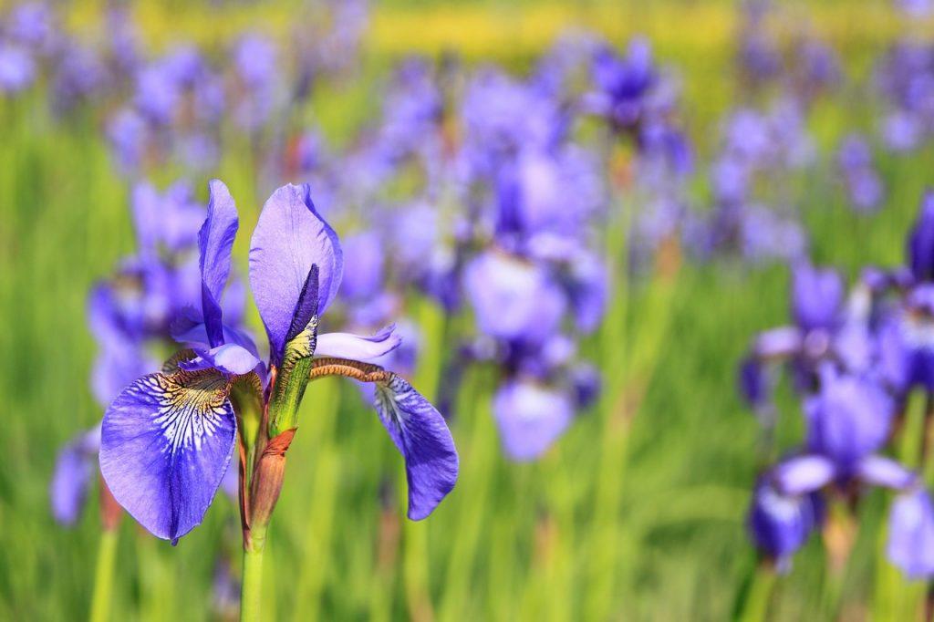 flower-76336_1280